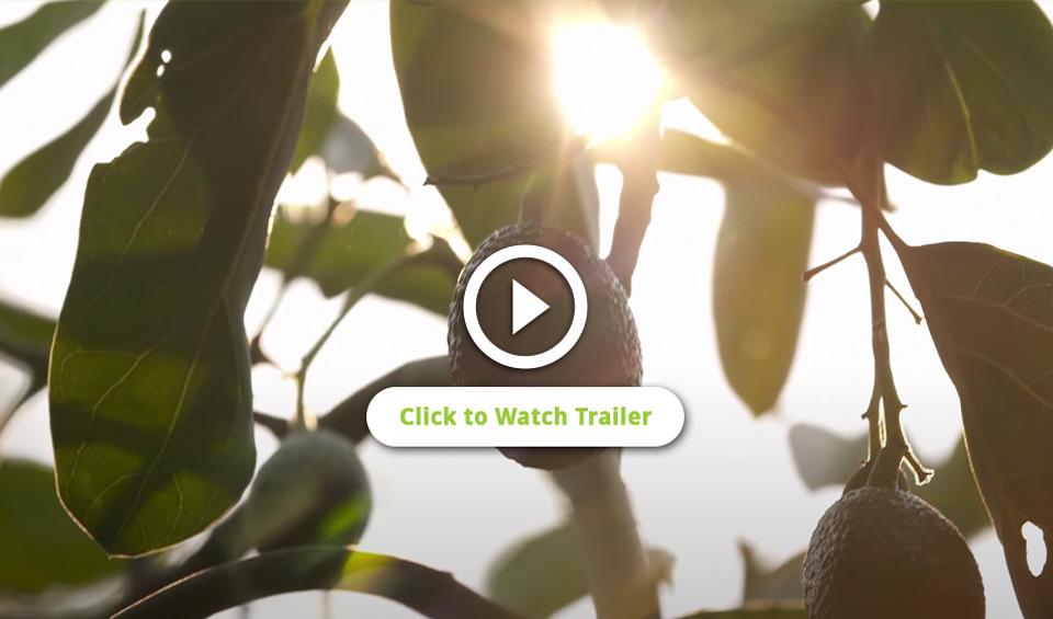 avocodo-land-video